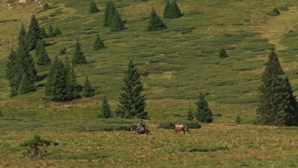 Cowboy riding horse in the mountain meadow. Pine forest of trees