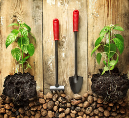 Seedlings of pepper, rake and shovel on a wooden background