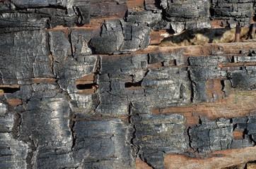 Burned wood 11