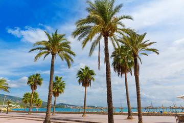Majorca Platja Palmanova beach Son Maties Mallorca
