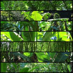 Collage von Blättern im Regenwald