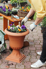 Spring in the garden, potting flowers