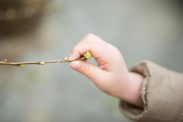 花梨の新芽を触る子供の手