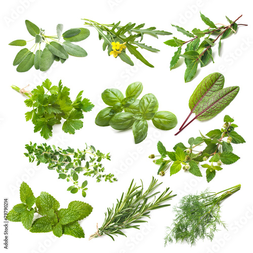 Kitchen herbs collection - 79790214
