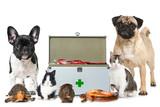 Naklejka Erste Hilfe Haustiere