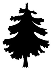silhouette of spruce