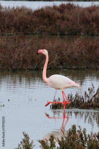 Foto op Aluminium Flamingo Majestueux