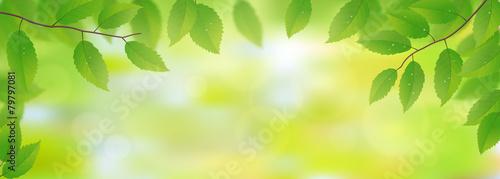 Fototapeta Fresh green leaves background, vector illustration
