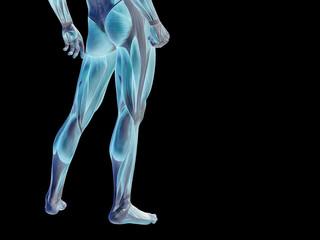 Conceptual human body anatomy on black