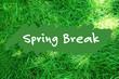 Spring break concept. Green grass background