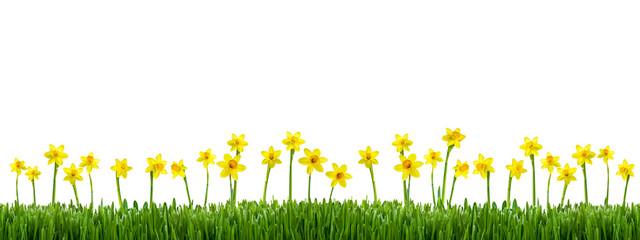 Blumenwiese vor weißem Hintergrund