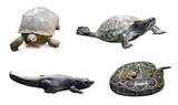 Set of reptilian