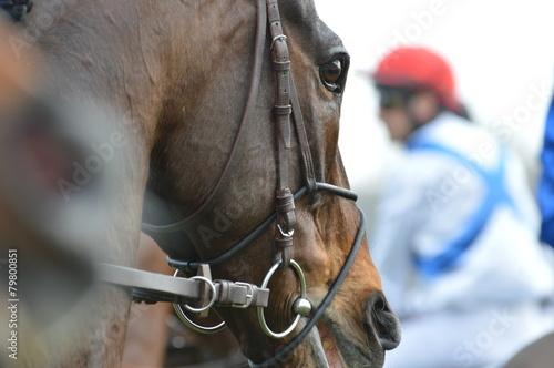 cheval de course - 79800851