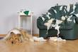Leinwanddruck Bild - Gelangweilter Hund mit zerfetztem Ledersessel