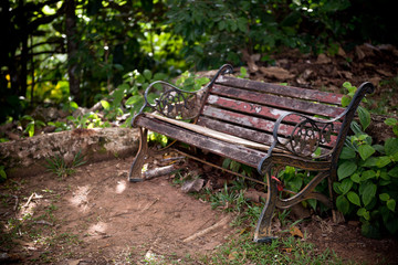 Old wooden bench in a green forest