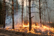Leinwandbild Motiv Forest fire