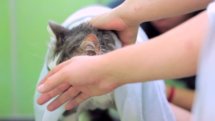 People Stroking Cat Suffering From Heat