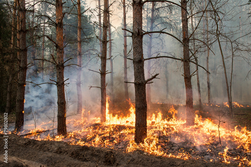 Forest fire - 79802802