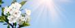 Leinwanddruck Bild - Frühling Panorama