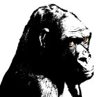 illustration of gorilla, black and white with colored eyes