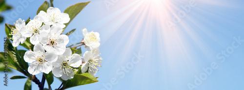 Leinwanddruck Bild Frühling Panorama