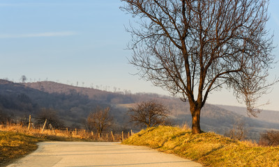 Mandelbaum am Weg entlang vom Leithagebirge