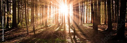 Sonne im Wald - 79807635
