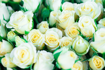 Fresh white roses with green leaves