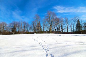 Footprints on the snow and a forest on background.
