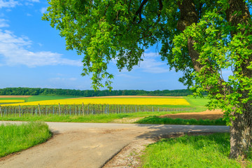 Countryside road along yellow rapeseed flower field, Austria