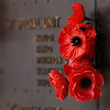 Red poppy to honour veterans in the World War - 79811281
