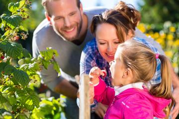 Familie bei der Gartenarbeit