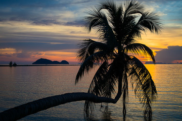Coconut palm tree silhouette at sunset. Phangan island, Thailand