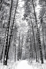 Road through frozen forest with snow black and white