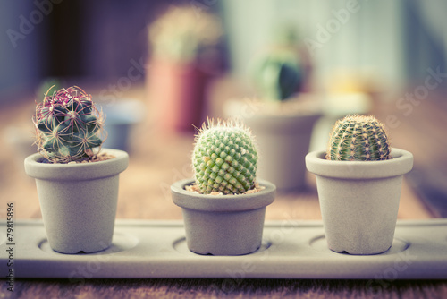 Foto op Canvas Cactus Group of cactus on on the wood background