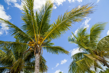 Palm Trees in the Bahamas