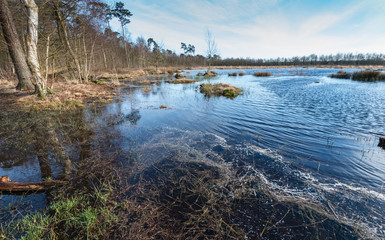 Belgian nature reserve at the end of winter