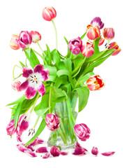 Tulpen, Blütenblätter, Nostalgie
