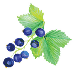 branch blackcurrant