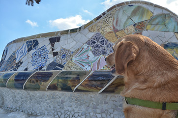 Domestic dog at Parc Guell