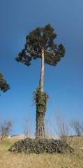 Augusta Raurica Baum Panorama