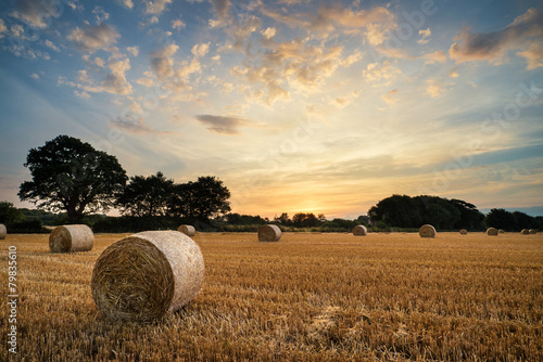 Rural landscape image of Summer sunset over field of hay bales - 79835610