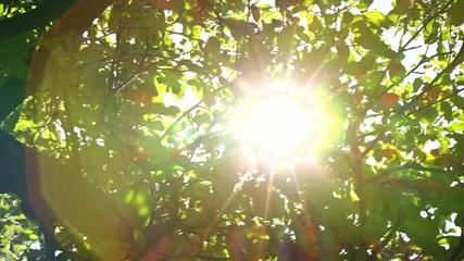 Sunlight Solar Power Through Green 7 pan