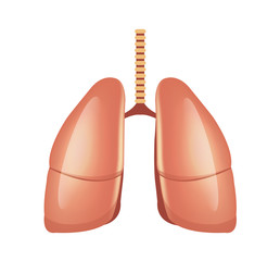 Vector lungs illustration