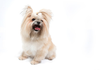 Cute small dog on white background