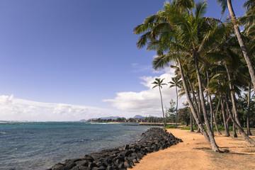 Coconut Palm tree on the sandy beach in Kapaa Hawaii, Kauai