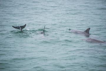 Bottlenose Dolphin Group