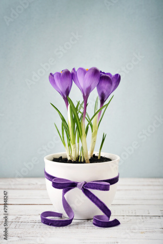 Fotobehang Krokus Crocus in vase