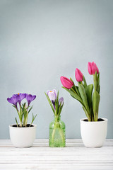 Tulips and crocus
