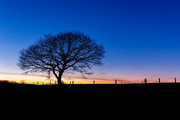 Baum im sonnenuntergang bei Monschau